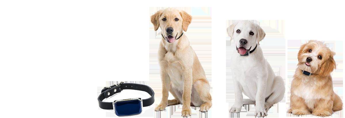 EUSANET - GPS Tracking für Hunde, Katzen, Assets und vieles mehr. EUSATEC IoT GPS Tracking Lösungen für Logistik und Fuhrparkmanagement